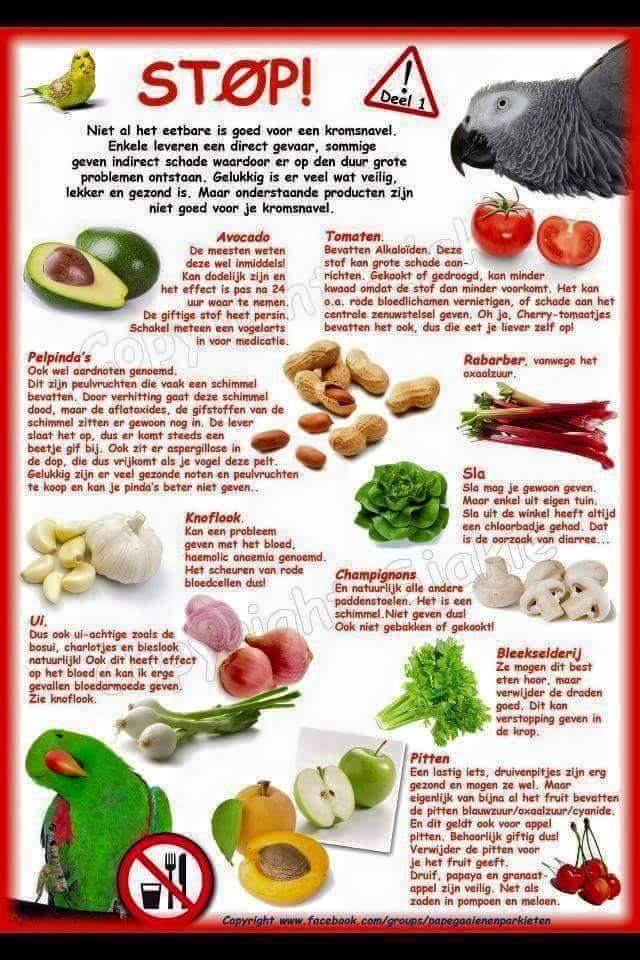 Groente en fruit valkparkiet